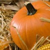 Delectable--healthy-pumpkin-treats-for-autumn_16000592_800614993_1_0_11040_100.jpg