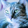 Tips-for-achieving-the-purrr-fect-cat-eyes_16000592_800584534_1_0_7004603_100.jpg
